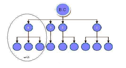 مفهوم شاخه در مولتی لول مارکتینگ